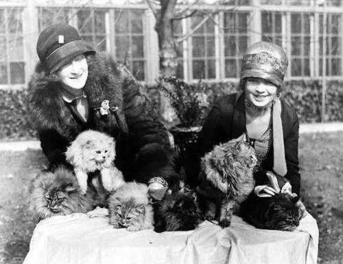 Washington Cat Show at the Wardman Park Hotel in Washington D.C., 1920s.