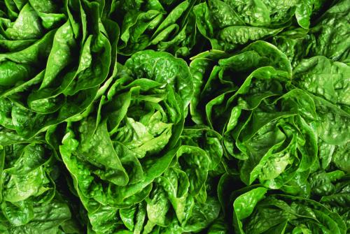 Spinach is one of the healthiest foods on earth